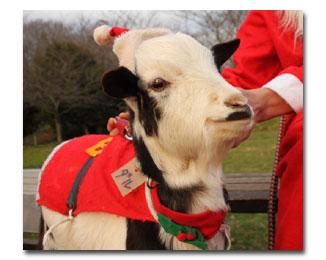 xmas-t4-pゆめ牧場クリスマス