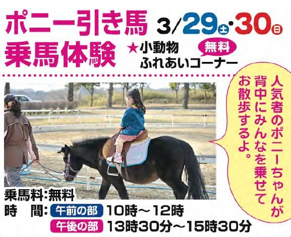 ポニー引き馬乗馬体験