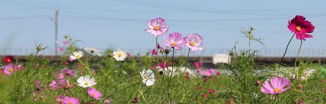 9-2-1与田浦コスモス祭り2014・9月14日~_640