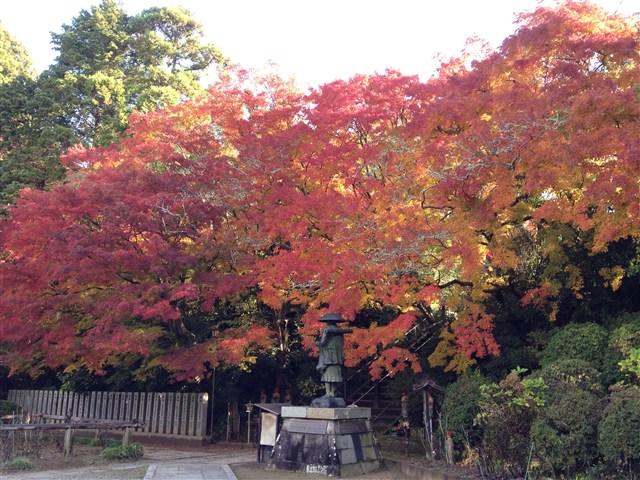 紅葉2014観福寺11月28日%20(4)