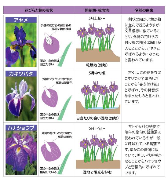 ayame-011あやめの生育環境