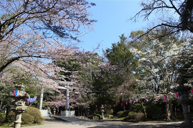 香取神宮 3月31日%20(5)